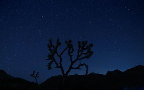Joshua Tree- Astro Photography 1