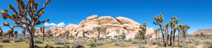 Joshua Tree Panorama