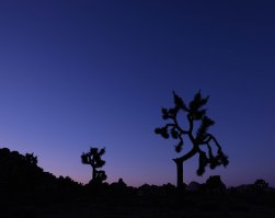 Joshua Tree Civil Twilight