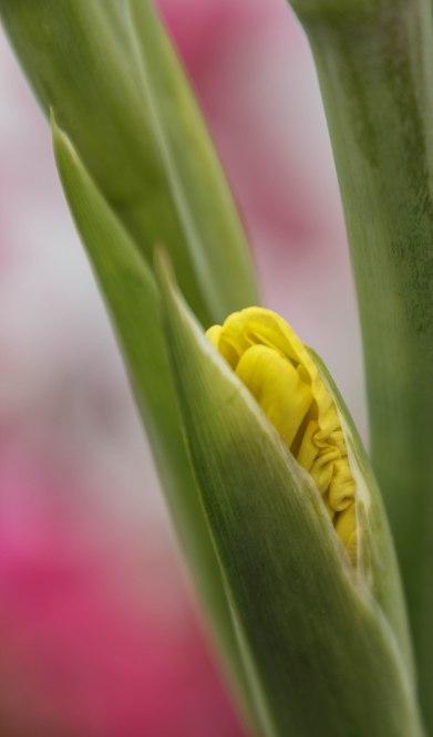 Esalen Yellow Spring Blossom